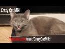 кошка играет , кот прикол , Забавные животные видео 26