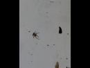 Паук очищает сетку ловушку от скорлупы семечек