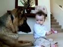 Супер мега прикол! Маленький ребенок и огромная собака