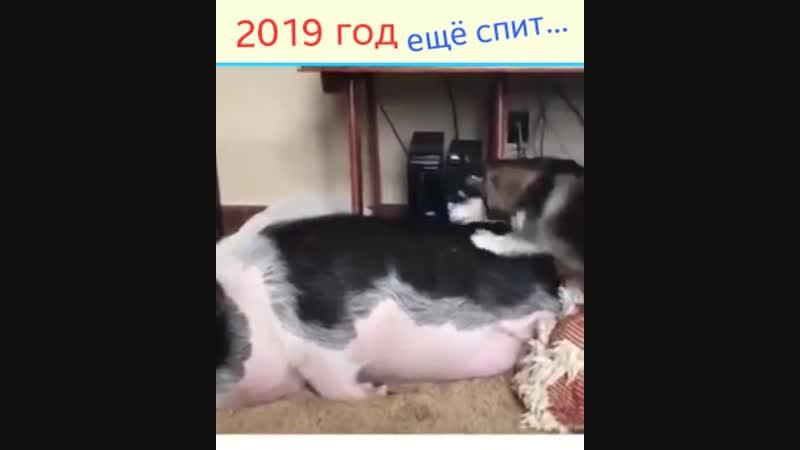 НОВЫЙ 2019 год ЕЩЕ СПИТ