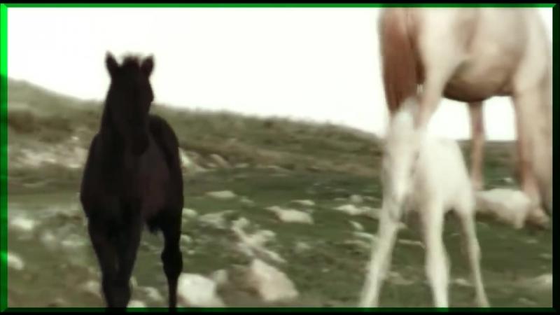 Далеко, далеко ускакала молодая лошадь))