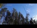 В Алексине возобновили вырубку леса у деревни Карташево Видео