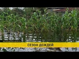 Сезон дождей в Могилёвской области