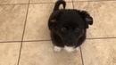Stella, ein Hund in Not aus dem Tierschutz
