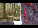 Bigfoot exists Bigfoot Captured On Trail Cam? Bigfoot Caught On Tape 5 снежный человек йети мистика сверхъестественное ужас