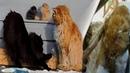 Koshlandia Дуэт двух котов Пух и Серый Pooh vs Gray The duo of two cats