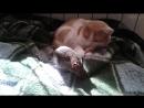 белка лезет коту