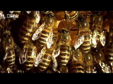 Animal Fight Club [National Geographic] Бойцовский клуб для животных