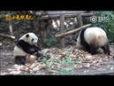 Mei Lun and Mei Huan (04/18)