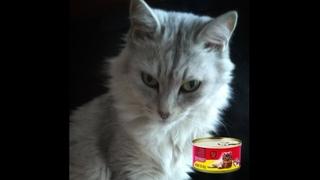 Обзор корма для кошек от BIG C