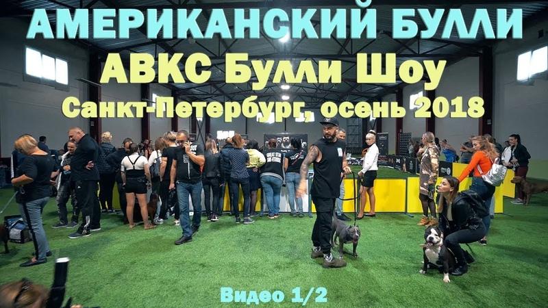 ABKC Булли-шоу, Санкт-Петербург осень 2018. Интервью с президентом ABKC Dave WIlson.