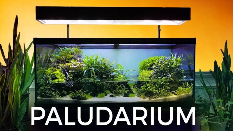 Guided Tour of this Stunning Paludarium