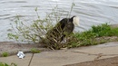 Живёт вот такой пёс в Ижевске - лает на воду