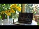 Дача Просто зарисовки Светины садово творческие муки Ваш совет Новая Рубрика Дача Оли Шотиной