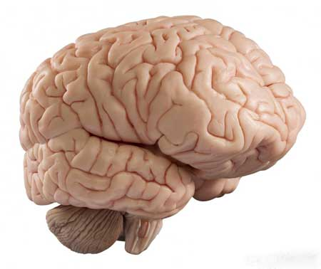 Винопектин увеличивает кровоток в мозге.
