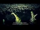 Shaik Abu Baker Al Shatiri Surah 44 Ad Dukhan