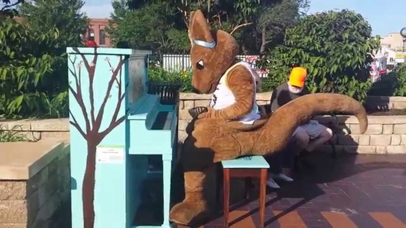 Maple Leaf Rag - Kasey the Kangaroo (UMKC Mascot)