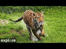 Vacation Rotation - Big Cat Rescue powered by