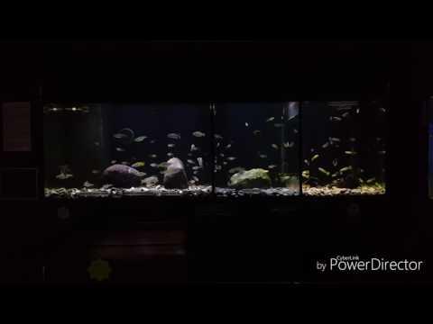 DENNERLE planta hunter gravels @ crowders aquatics