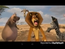 Ржачный момент из мультфильма Мадагаскар 2