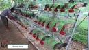 Best Farm RLG Monkayo GF - Mayor Ramil Gentugaya