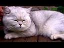 Кот Себастьян любимец детей и взрослых
