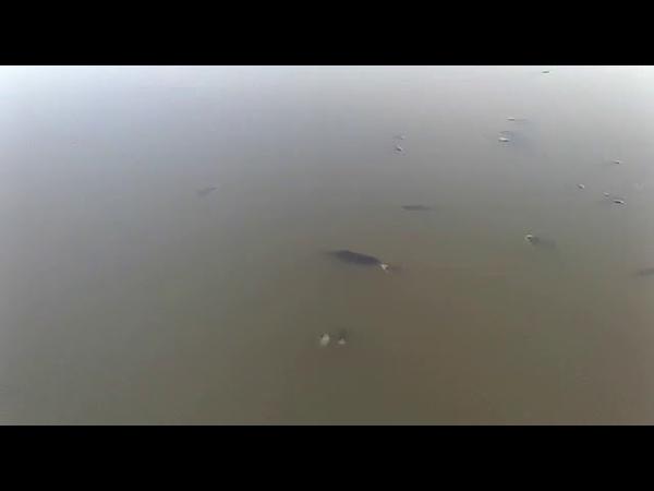Томичи сообщают о массовой гибели рыбы в водоемах города