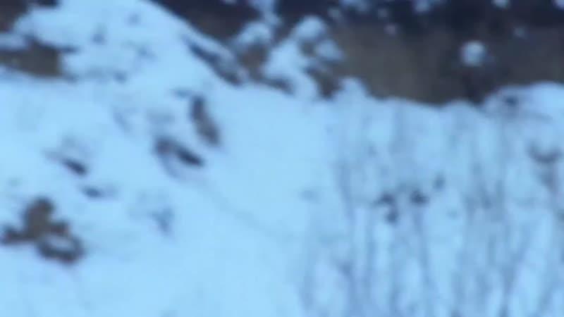 Тимерташ Кабул Красноярск сын Яны и Нурика Вит Бир Ягана * Олимпик Стар Нео Нуар Еще больше фото и информации на сайте питом