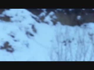 Тимерташ Кабул (Красноярск) сын Яны и Нурика (Вит Бир Ягана * Олимпик Стар Нео Нуар)Еще больше фото и информации на сайте питом