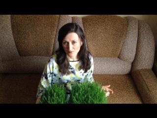 Зеленые_ростки  пшеницы   как приготовить Витграсс_.__