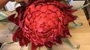 Ростовые цветы бутон махровой астры