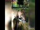 ВолкВоланд поймал на охоте плюшевого зайца 😄ДИПЛОМ КУРСОВАЯ т/v/w 79127939429 vk/id42098355