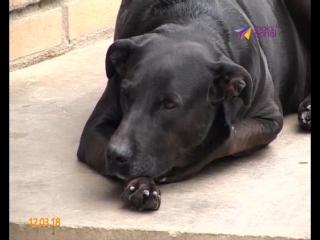 Защита бездомных животных в Сочи выходит на новый уровень