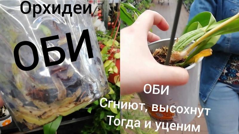 Орхидеи. ОБИ 23 мая. Уценки убитых напрочь Орхидей, без цветов Орхидеи не уценяют, ждут когда сгниют
