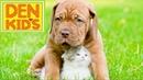 Детские песни про кошек и собак. Сборник клипов