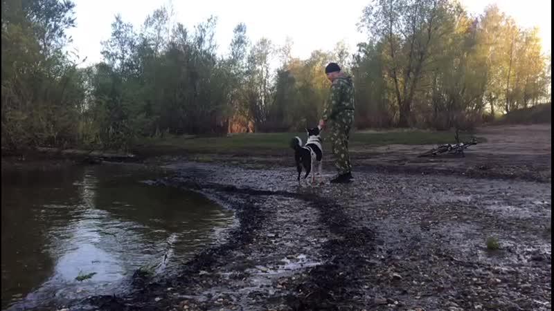 За палкой в воду
