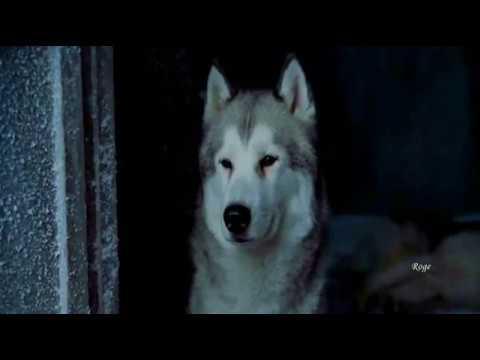 Hans Zimmer Lisa Gerrard - Sorrow - Yvonne S. Moriarty [Orchestrator]