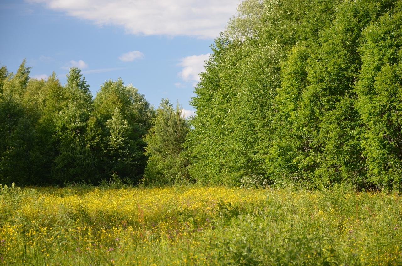 3lNwiVaa0FQ Никола-Ленивец арт-парк в Калужской области.