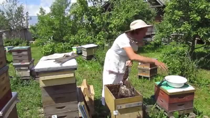 Подсадка матки методом Налет на матку. мёд.