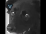 Как удивить вашу собаку / наша группа: ТОРТ-РЕЦЕПТ-VК