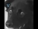 Как удивить вашу собаку / наша группа ТОРТ-РЕЦЕПТ-VК