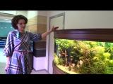 Внимание! Конкурс от аквариумного салона