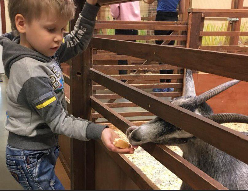 Дети из ЦПСиД на Зеленоградской будут бесплатно посещать контактный зоопарк