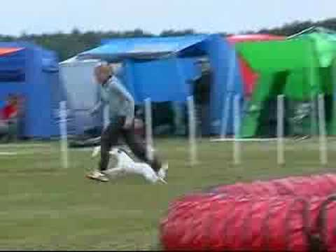 Fox Terrier Agility Buffy Karlstad 080718 H3