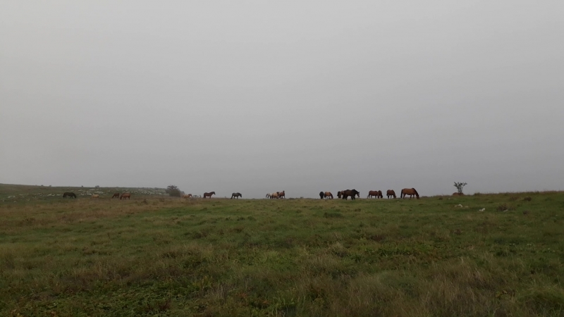 24 сентября 2018 года, лошади на Караби