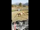 Ферма с животными/ Коняшки)