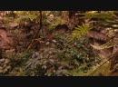 04.Сады мира.2009.WEB-DLRip.GeneralFilm