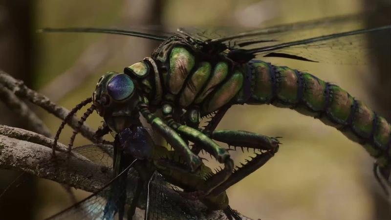 Древняя Земля (Новый взгляд на доисторическую эпоху) - Почему вымерли гигантские насекомые?