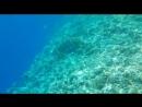 Подводный мир. Красное море
