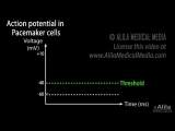 18 cardiac action potential